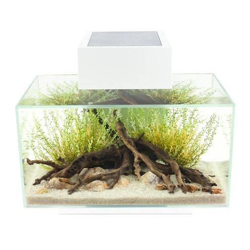Acuario-Fluval-Edge-23L-Aquarium-Set-