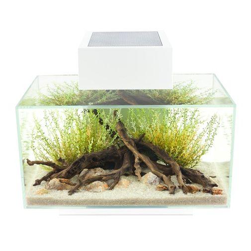 Acuario-Fluval-Edge-23L-Aquarium-Set-