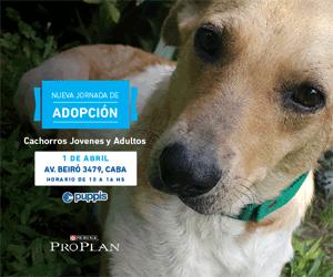 Jornada Adopciones 29 Abril
