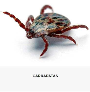 10041818 0 GARRAPATAS