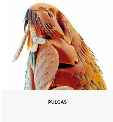 10041823 0 PULGAS