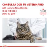 Alimento-Royal-Canin-para-Gatos-Castrados-Young-Female-1.5-Kg