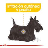 Pouch-Royal-Canin-Canine-Care-Nutrition-Dermaconfort-85-Gr