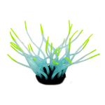 Anemona-Millex-Fluor