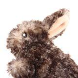 Catnip-Gigwi-Rabbit